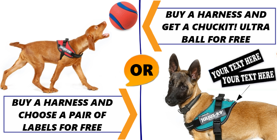Buy harness and choose warranted gift!