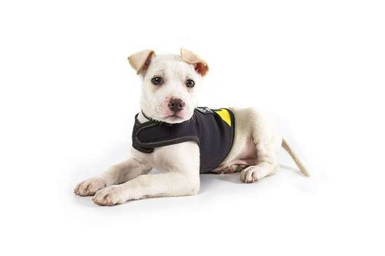 Picture of IDC® neoprene dog jacket - Baby 1