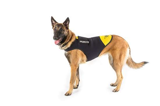 Picture of IDC® neoprene dog jacket - L