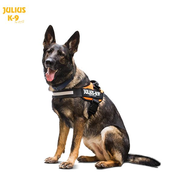 Julius K9 Idc 174 Powerharness For Large Sized Dogs Las