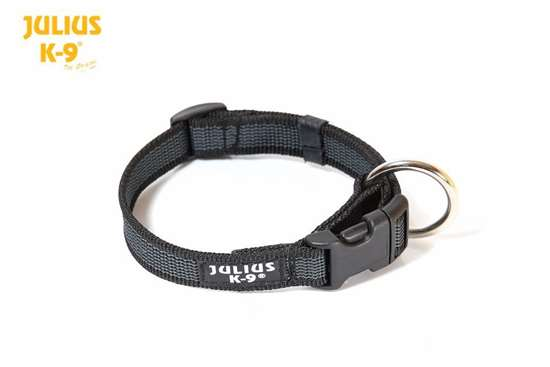 """Picture of Color & Gray Collar 3/4"""" - more colors available"""