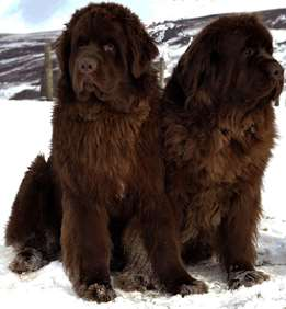 Picture of Newfoundland