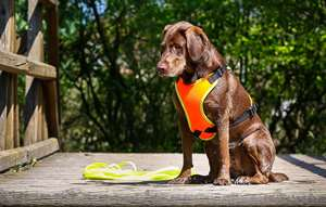 Picture for category Mantrailing and Outdoor dog harness