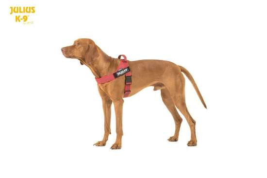 Picture of Julius-K9 IDC Belt Harness Size 1