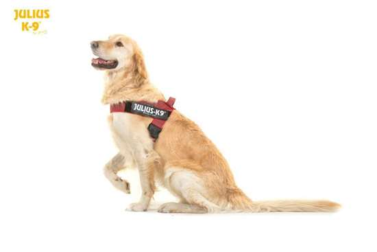 Picture Of Julius K9 Idc Belt Harness Size 2