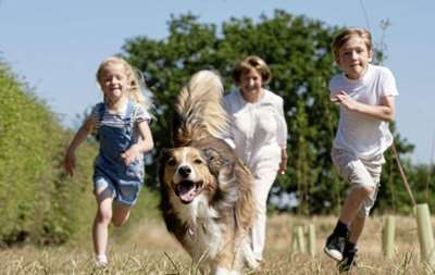 Is owning a dog the secret ingredient of longevity?