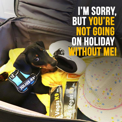 Traveling with Dogs- Let's Make the Vacation Dog Friendly