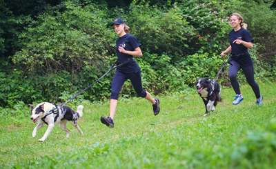 The Perfect Summer Body Workout - Running with Dogs in Summer