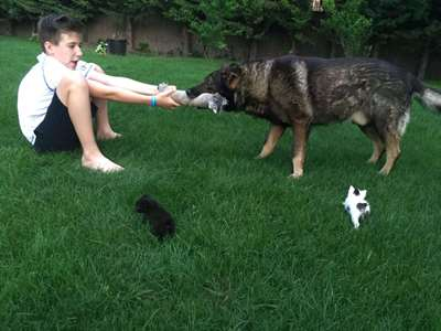 5 Reasons Why Kids Should Have Pets