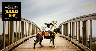 How to choose a high quality dog harness, and how to use it correctly