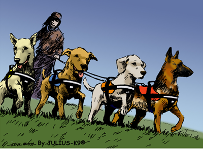 The history of dog harnesses