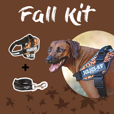 Take Your Dog For a Walk-  2018's Autumn Dog Fashion Trends