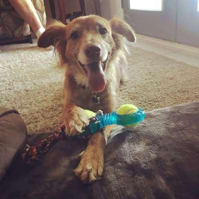 Xmas Gift Ideas - Get the Best Gift for Your Dog